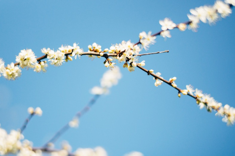 Blossom blooming in winter